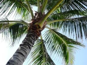 Eine Palme und dahinter strahlend blauer Himmel