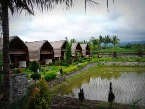 Unterkunft umringt von Reisfeldern in Tetebatu