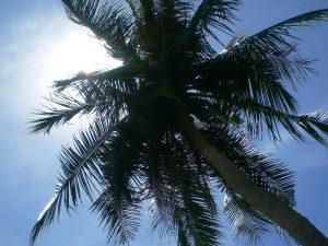 Eine Palme bietet Ihnen wohltuenden Schatten auf Bali.