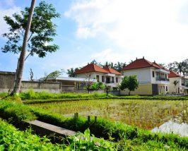 Budgethotel in Ubud umgeben von Reisfeldern
