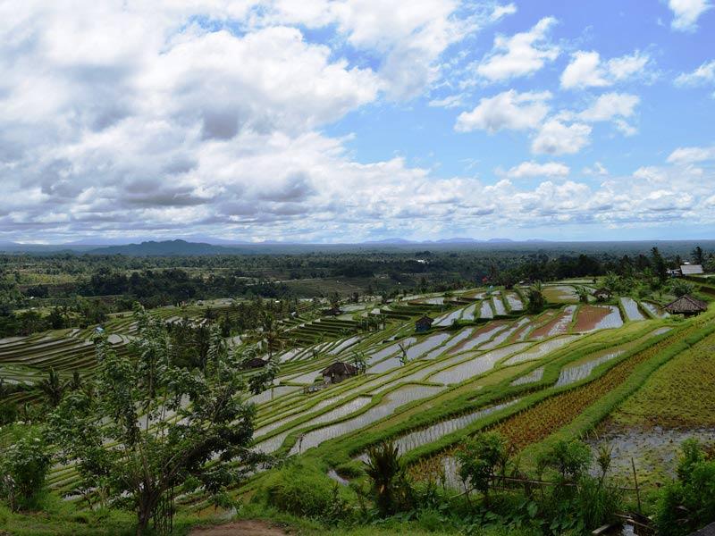 Panoramablick auf die Jatiluwih Reisterrassen