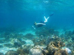 Schnorcheln bei unberührten Korallenriffen