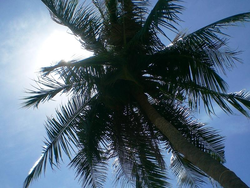 Eine Palme und im Hintergrund ein strahlend blauer Himmel.