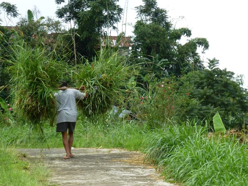 Einheimsicher auf einem Weg auf Java.