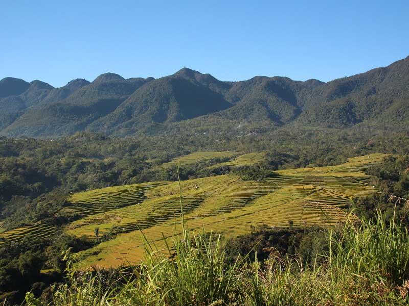 Die grünen Reisfelder von Ruteng