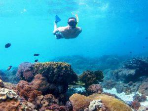 Entdecken Sie beim Schnorchelausflug die bunte Unterwasserwelt vor Maumere