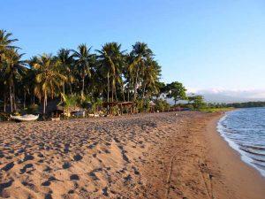 Palmenstrand bei Maumere auf Flores