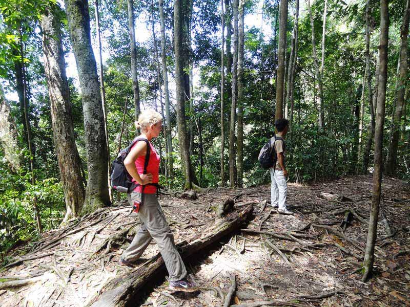 Beim Trekking geht es tief hinein in den Dschungel
