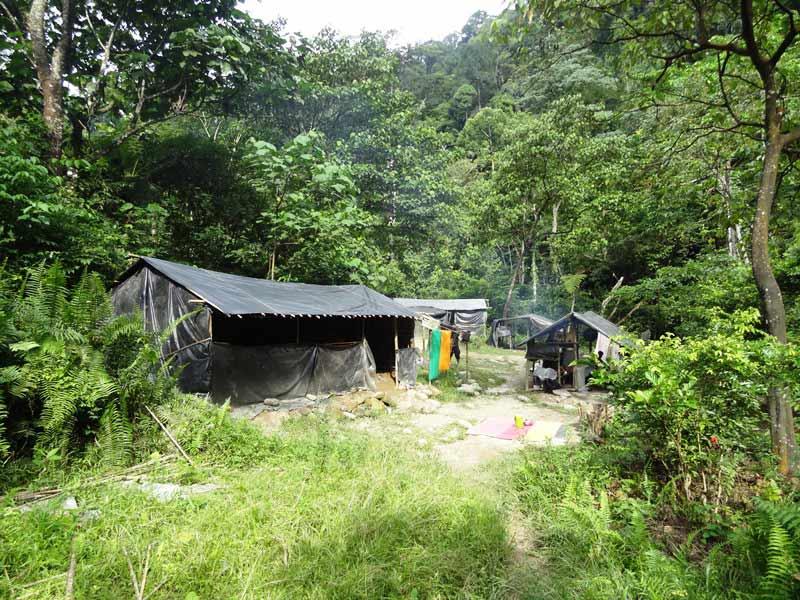 Mitten in der Natur: Zeltcamp Bukit Lawang