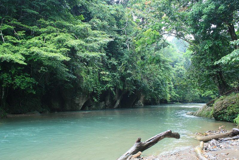 Die grüne Dschungellandschaft bei Tangkahan auf Sumatra.