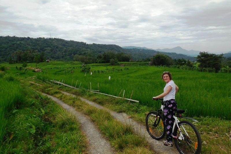 Reisende fährt mit einem Fahrrad entlang der grünen Reisfeldern auf Lombok.