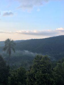 Die grüne Naturlandschaft auf Bali.