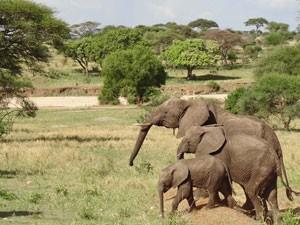 Elefantenfamilie in der grünen Natur