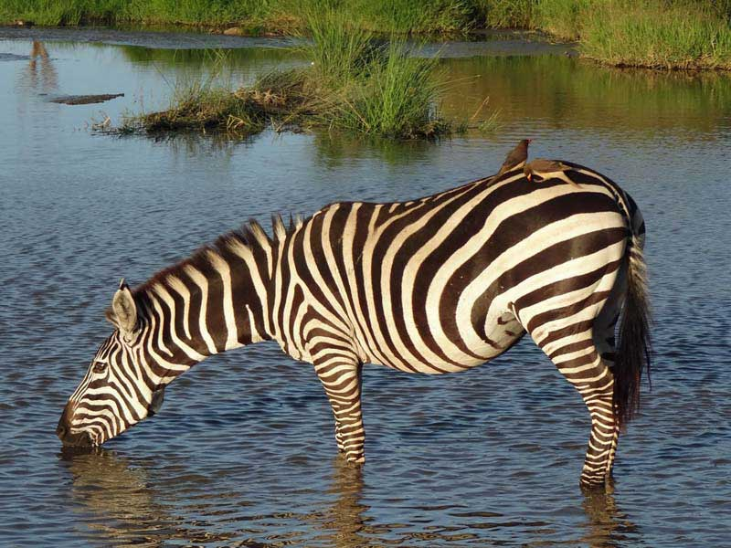 tansania rundreisen individuell safari beratung