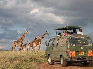 Während Ihrer Safari in Kenia sind Sie im Minibus unterwegs