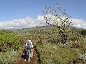 Rongai Route Kilimanjaro Wanderung Tansania Natur