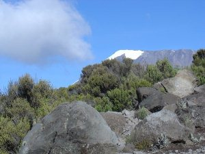 Barranco Camp - Karanga Camp: Blick auf den verschneiten Gipfel