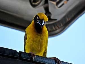 Viktoriasee Vogelbeobachtung Kenia Tansania Rundreise