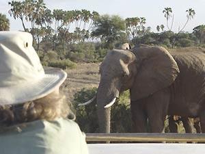 Sie unternehmen ausgedehnte Pirschfahrten in der Masai Mara...