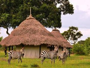 Kenia Masai Mara Zebras Unterkunft Bandas