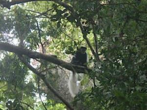 Entdecken Sie die Einwohner der Wälder