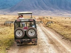 Mit dem Safarifahrzeug mit hochklappbarem Dach nah an den Tieren