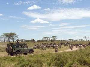 Safarifahrzeug nahe einer Zebraherde