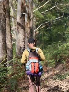 Guide in der grünen Natur der Usambara Berge