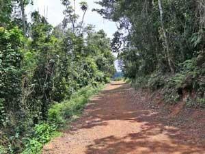 Die grüne Natur der Usambara Berge