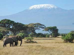 Elefanten vor Gipfel des Kilimanjaro - Kenia Tansania Rundreise
