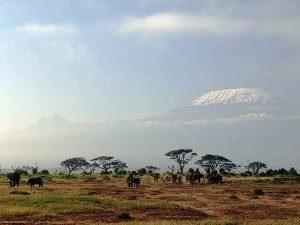 Savanne im Amboseli Nationalpark - Elefanten vor Kilimanjaro - schneebedeckter Gipfel - Kenia Tansania Rundreise