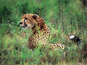 Nationalparks Tansania und Kenia