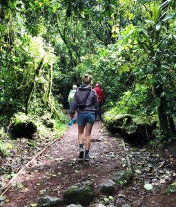 Tansania - Kilimanjaro Tour - Wandern durch den Regenwald