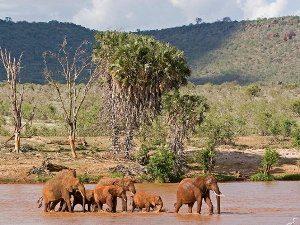 """""""Rote Elefanten"""" im Tsavo Ost Nationalpark"""