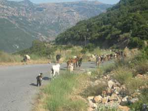 griekenland kids berggeiten canyon
