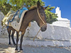 Typisch Grieks langs ezelpad