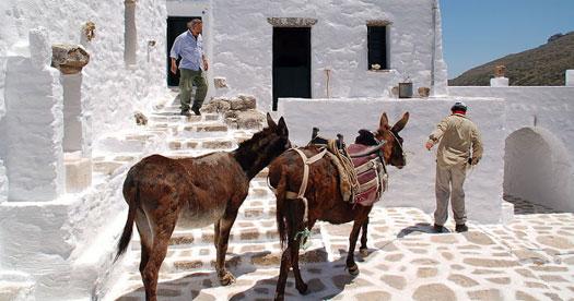 Reizen Griekenland - ezels in Amorgos