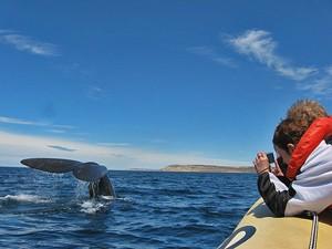 Walbeobachtung bei Argentinien Familienreise