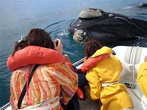 Wale auf der Peninsula Valdes