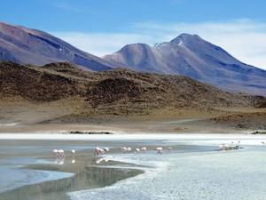 Flamingos Salar de Atacama Chile