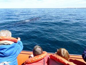 Wale vor Peninsula Valdes