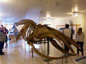 Museum auf der Peninsula Valdes