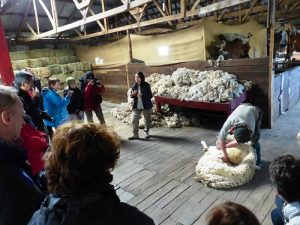 Schafschur in Patagonien