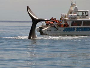Patagonien Rundreise - Wale beobachten