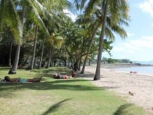 Australien Ostküste Airlie Beach Palmenstrand