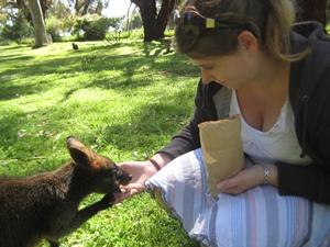 australien-sueden-wallaby
