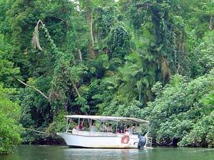 Bootsfahrt auf dem Daintree River