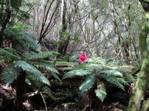 Tasmanien Reise - Mount Field Nationalpark