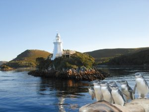 Pinguin Tour - Highlight Ihrer Tasmanien Reise