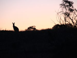 Kangaroo Island im Sonnenuntergang
